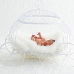 newborn photo-8